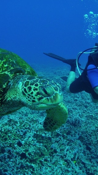 Scuba Diving With Caretta Carettas